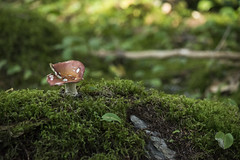 Alone on a Hill (Clif Budden) Tags: nature mushroom rock forest newfoundland moss rocks foliage toadstool