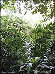 3211094687_7f031d3b15_o (gray.florie) Tags: allrightsreserved usewithoutpermissionisillegal ©2009florencetomasulogray florencegray floriegrayflorencetomasulograytomasulofloriegrayfloriegraycom