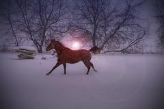 IMGP1619-1 (pentaxgirl86) Tags: winter horse usa sun snow wisconsin photography photo running equine