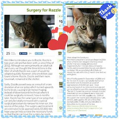 Please help out Razzle!  I don't post things like this very often, erm, ever. (Raccoon Photo) Tags: charity rescue pet cats pets animals collage cat feline critter tabby cleveland kitty compassion surgery appreciation give clevelandohio help kitties need purr meow volunteer non profit fundraising fundraiser share donations adoption donate nonprofit fund polyps tabbycat razzle appreciative petlovers kittylove ilovecats catlove nokill pleasehelp catsanctuary catlovers catadoption charitable sickcat youngcat animallovers haveaheart allcats welovecats beautifulkitty cathealth animalinneed beautifultabby nokillcatsanctuary helpacat everybitcounts gofundme purrfectcompanionscatsanctuary clevelandnokill clevelandgives purrfectcompanions clevelandcatsanctuary clevelandnokillcatsanctuary supportacat clevelandcatrescue clevelandnokillsanctuary catneedshelp purrfectcompanionssanctuary purrfectcompanionscatsanctuaryofclevelandohio purrfectcompanionscleveland
