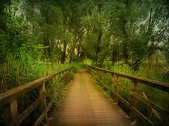 IMG_0200 the bridge (pinktigger) Tags: bridge holland green netherlands dutch fence nederland oostvaardersplassen hff naturalreserve rewilding