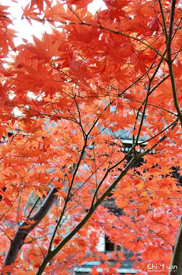 清涼寺12_nEO_IMG.jpg