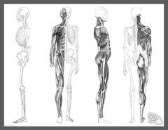 Anatomy   img202 (Ricky Sahlstrom / risswe.com / on-off) Tags: sweden anatomy sverige draw malmö ricky malmo sahlström sahlstrom