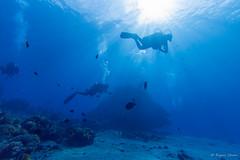 P9095928.jpg (seahorse4907) Tags: bali sun fish nature underwater wideangle 自然 太陽 廣角