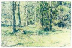 Forest (Xerethra) Tags: nature forest 35mm landscape geotagged spring nikon europa europe sweden natur skandinavien may skog sverige scandinavia maj vår landskap järfälla kallhäll 2013 stockholmslän nikond80 dikartorp kallhällstockholmslänsverige