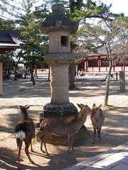 DSCN2545 Todaiji Temple, Nara (johnjennings995) Tags: japan temple deer nara todaiji  tdaiji easterngreattemple