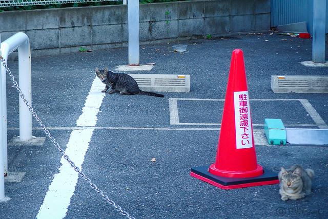 Today's Cat@2014-09-16