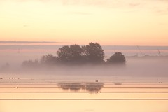 Misty (peeteninge) Tags: mist nature natuur morning sochtends sunrise zonsopgang reflecties reflections tree bomen yellow geel outdoor