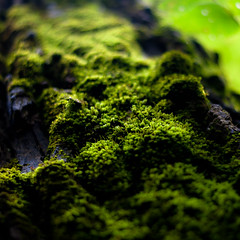 Tree Moss 001 (noahbw) Tags: captaindanielwrightwoods d5000 dof moss nikon abstract blur depthoffield forest natural noahbw square summer treetrunk trees woods