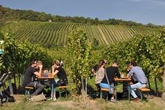 sDSC_0066 (L.Karnas) Tags: wien vienna wiede    viena vienne autumn austria sterreich herbst 2016 weinwandertag wein wander tag wanderung wine wandering neustift am walde