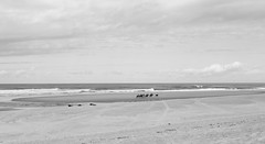 Edge of the water (Solne Tarrieu) Tags: landscape people nature beach bw blackandwhite person walk france seascape horse horses openair seaside inspiration plage instant stroll paysage paysages chevaux autonme bigscape edgeofthewater