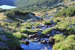 IMG_7245 (lajos.hanyecz) Tags: retezat nationalparks