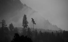 Brunnen (Switzerland) - Forest (Danielzolli) Tags: schweiz suisse svizzera svizra suiza suia switzerland swiss sveits szwajcaria svycarsko svajciarsko elvetia helvetia isvicre zvicer wald wood forest las les foret bosco bosque