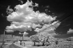 Fan de chichourlo ! (Lolo_) Tags: ir infrared provence france infrarouge rousset saint victoire road route montagne mountain pays aix trees arbres cloud nuage vines vignes