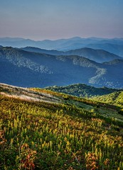 In desperate need of some mountain therapy. Pictures will have to do for now. Here's one last shot from Max Patch (plottsdaniel) Tags: outsideisfree getoutside outdoors hiking hike nature unitedstates us northcarolina tennessee smokymountains appalachianmountains appalachia blueridgemountains ridges mountain trees sky layers mountains green blue longexposure dslr landscapephotography landscape nikkor nikon