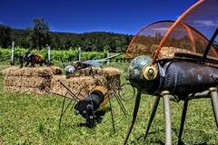(Raoul Duke70) Tags: sculptureinthevineyards wollombi sculpture australia art wines
