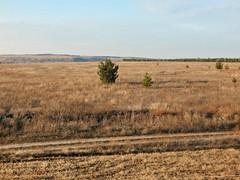 Millerovo-horizontal (Horosho.Gromko.) Tags: field autumn nature tree fall grass rostovregion russia