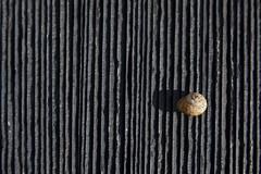 Repos (Gerard Hermand) Tags: 1610255035 gerardhermand france bretagne plozevet canon eos5dmarkii formatpaysage ardoise slate escargot snail coquille shell ombre shadow