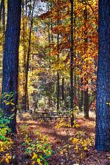 DSC09060-62_HDR (Capt Kodak) Tags: autumn chattahoocheerivernationalrecreationarea fall hdrefexpro2 madefrom3images medlockbridgepark nationalparkservice nikcollectionbygoogle niksoftware photomerge