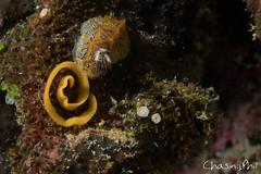 DSC03329-47.jpg (chasingphil) Tags: diving southeastasia similanislands thailand