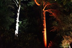 DSC04119 (Twareg) Tags: 2016 aboretum bpw enchanted forest westonbirt bathphotowalk gloucestershire england handheld night nightshot