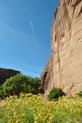 Canyon de Chelly, AZ (appaIoosa) Tags: appaloosa appaloosaallrightsreserved arizona az canyondechelly din navajo naabeeh navajonation navajoreservation navajonationreservation tsyi antelopehousetours benteller rabbitbrush chamisa