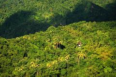 Saint Lucia, 2016 (marc_guitard) Tags: st saint lucia caribbean tropical tropics atlantic ocean travel tourism destination lifestyle island jungle rainforest forest house secluded lush greenery beautiful palm trees