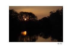 Sunset (PedroCohen) Tags: reflexes reflection sun canon sunrise sunset pantanal sopaulo brazil brasil