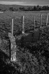 DSCF3098 (Galo Naranjo) Tags: guasca cundinamarca colombia cerca fence alambredepuas