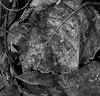 Frozen leaves (Sappho et amicae) Tags: sapphoetamicae željkagavrilović canon450d