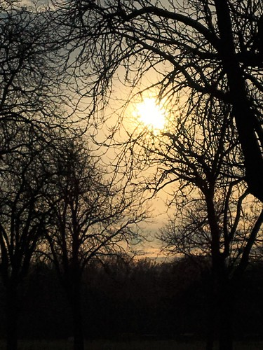 Sunshine through brunches