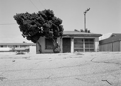 Tarmac trees (ADMurr) Tags: la southla pavement tarmac abandoned zeiss rolleiflex planar crop mf