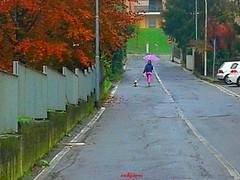 capture (archgionni) Tags: street ragazza girl cane dog autunno autumn colori colours alberi trees foglie leaves muro wall ombrello umbrella pioggia rain christiangroup