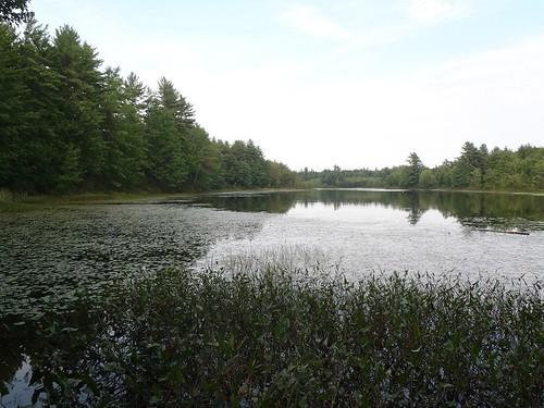 Little Watchic Pond - www.amazingfishametric.com