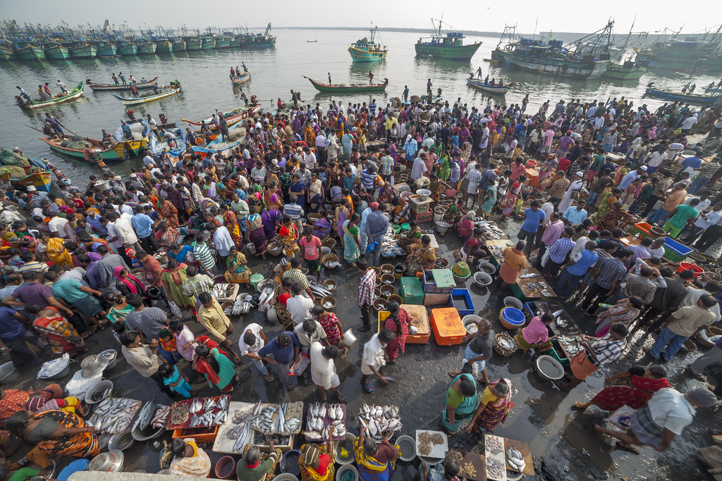 The world 39 s most recently posted photos by shaik mohaideen for Fish market prices