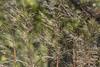 161024-1180-Reserve (Sterne Slaven) Tags: massachusetts plymouth marblehead capecod marthasvineyard edgartown oakbluffs vineyardhaven salem lynn turkeyvulture seawall tide waves seaweed historic october sailboats lighthouse hightide lowtide wildturkeys offseason canoe sunset fisherman seagulls gulls nakedwoman lensbaby katamabeach lucyvincentbeach gayhead chappaquiddick lagoon bramble whalingchurch seacreature cemetery plimothplantation roosters spiderwebs oldburialhill pilgrims clamdiggers sanddunes barnstable taunton sexynude sunhalo fullmoon sterneslaven water fountain 1600s wampanoag mayflower pelt harbor chathamma seals ocean atlanticocean coastal newengland actors