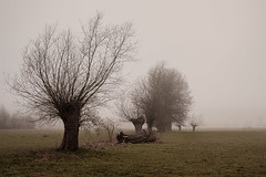 Trees in the mist (mkniebes) Tags: morning fog mist autumn trees cold haze bald bare fujinonxf352 fuji xt1