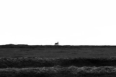 KLIS3196_S1 (Konrad Lembcke) Tags: iceland island landscape landschaft minimal black white abstract monochrome fuji x nature simple