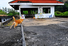 ,, Same Same but Different ,, (Jon in Thailand) Tags: aliens mama rocky roof jumping flying dog dogs k9 k9s jungle thedogpalace playing nikon d300 nikkor 175528 red blue chair blueplasticchair tail hands lips backstory trees iwasonly19 kadimakara digeridoo green yellow pink junglejounalism streetphotographyjunglestyle digeridoodrumdance thelittledoglaughed taggers thesaurus