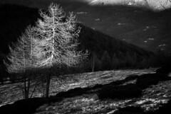 bnw Vaccera (Elena.D - ph) Tags: bnw bnwlandscape winter love nature pentax mountains