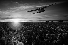 POP0023 (Smart Aviation Art) Tags: poppy poppies poppyfield poppyfields lancaster vulcan avro spitfire hurricane aircraft military bbmf