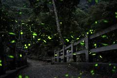 Startrails~12~1  Firefly (michaeliao27) Tags: firefly