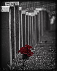 National Cemetery at Ft. Smith, Arkansas (Mitch Tillison Photography) Tags: cemetery poem headstones poppy redflower memorialday gravemarkers flandersfields nationalcemetery pentaxk5 sigmaaf400mm