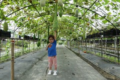 140620 Yilan (jccchou) Tags: blue portrait plant green kids children dc toddler comic sony caroline taiwan superman superhero m3 yilan  rx100