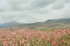 infinite flowers (narrativeless) Tags: travel flowers light sun mountain lake flower travelling film girl beautiful field 35mm hair nikon flickr sunny follow nikonfm10 fm10 kyrgyzstan photooftheday followme bishkek nikonfm kirghizia followmeto