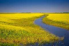 2014 Flood (skram1v) Tags: flooding farmers empathy assiniboine devastating july2014