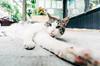 2132 Victoria (JoelZimmer) Tags: newyork animal brooklyn cat unitedstates parkslope victoria highlighted 1116mmf28 nikond7000