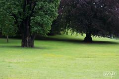 Green Green Gr... (Mifipifi) Tags: park trees tree nature floral digital garden landscape flora nikon natur pflanzen blumen gras landschaft bume garten baum flowerpower kamera florescence pflanzenwelt blumenundpflanzen nikond3100 nikonafsnikkor55300mm14556ged