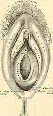Anglų lietuvių žodynas. Žodis glans clitoridis reiškia blizgesys clitoridis lietuviškai.