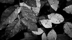 9 (31) (Ryan Gottsleben) Tags: statepark longexposure november flowers trees winter sunset summer blackandwhite sun lake seascape fall nature minnesota june wisconsin forest sunrise stars landscape photography march landscapes spring october december photographer ryan wildlife north lakes january may july sunsets superior grand august september shore april sunrises february marais mn duluth lakesuperior hdr twoharbors teenage landscapephotography temperanceriver ballclublake pcphoto gottsleben rg4652 pixelclick